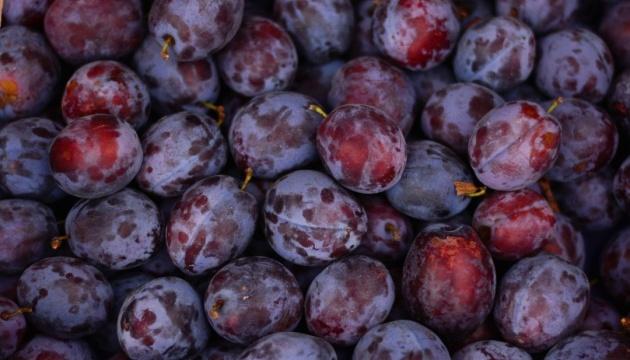 Слива є найдешевшим сезонним фруктом в Україні - експерти