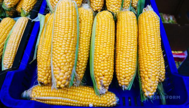 Вартість кукурудзи в портах України помітно зросла