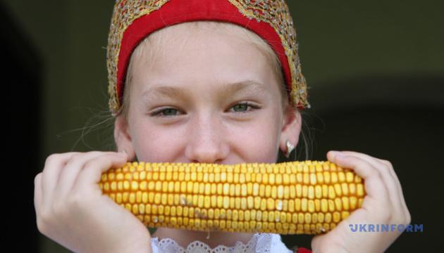 У Вінниці влаштують фестиваль солодкої кукурудзи