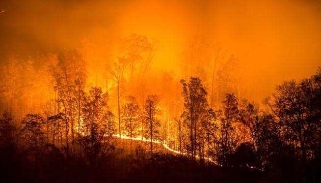 На Канарах более 2 тысяч человек эвакуировали из-за лесных пожаров