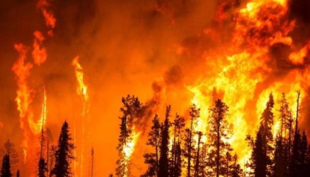 Чиновники РФ говорят, что не станут тушить пожар на 3 миллиона гектаров - не выгодно
