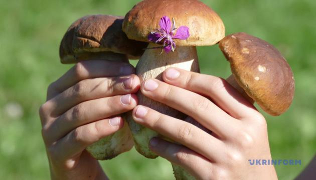 На Закарпатті знайшли гриб-велетень