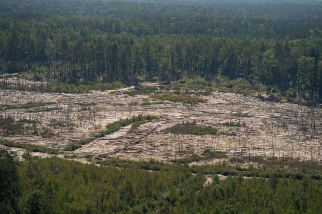 Ліс після видобутку бурштину