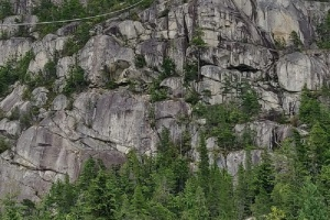 За десять років у Канаді планують висадити два мільярди дерев