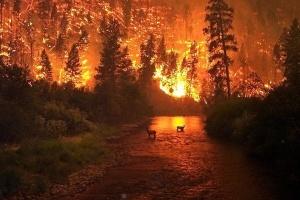 Greenpeace: En Sibérie, des incendies ont tué et contraint à migrer plus de 10 000 animaux
