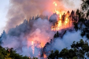 Из-за лесных пожаров на Канарах перекрывают дороги, восемь тысяч эвакуированных
