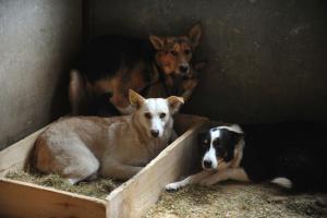В Киеве начали строить современный центр защиты животных