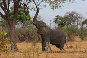 Кенія проведе перший перепис дикої природи