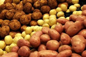 В Україні суттєво подешевшала картопля