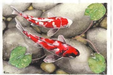 Roman Souchtchenko a peint des carpes koi japonais