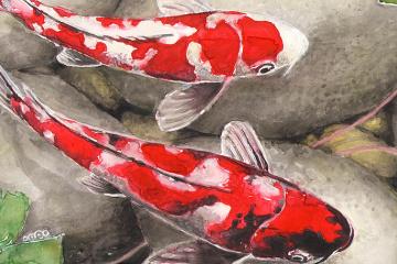 露拘束のスシチェンコ記者、日本の鯉の絵を制作