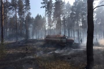 """Боротьба з """"чорними"""" лісорубами: херсонська поліція посилює перевірки"""