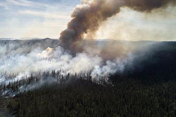 Дым от пожаров в Сибири может спровоцировать злокачественные опухоли - ученые