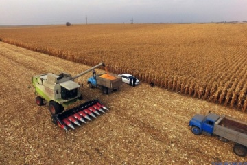Ukrainian farmers harvest grain and leguminous crops from 98% of area