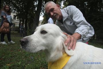 Des chiens aux bandanas jaunes «soignent» l'âme des vétérans