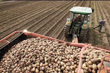 Ucrania se encuentra entre los tres principales países productores de patatas