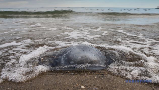 Пляжи Арабатской стрелки чистят от медуз