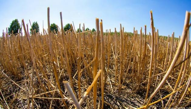 Європейські урожаї після спеки: постраждали, але не критично