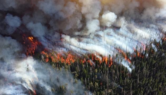 Екологічна катастрофа в РФ: скільки часу піде на відновлення лісів
