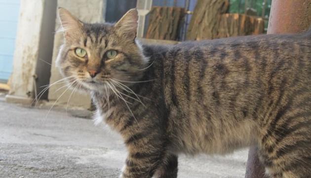 Кіт Семен влаштувався на роботу в музей Дніпра