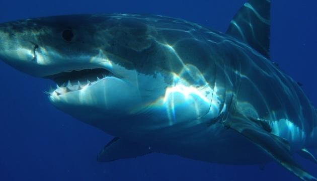 Во Флориде акулы за выходные трижды нападали на людей