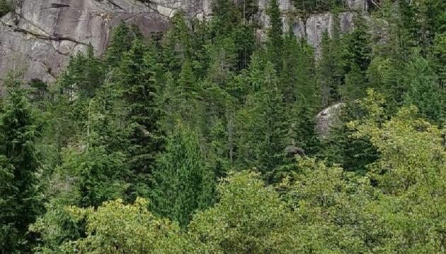 За десять лет в Канаде планируют высадить два миллиарда деревьев