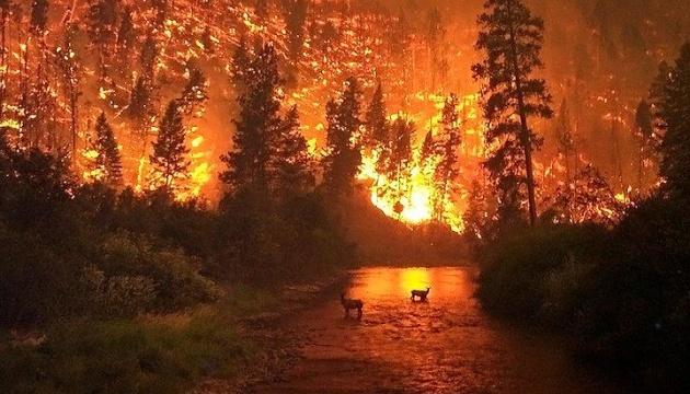 Пожары в Сибири убили и заставили мигрировать более 10 тысяч животных - Greenpeace