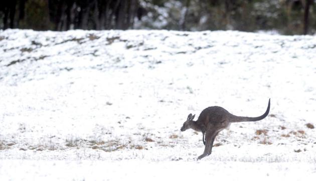 Південний схід Австралії засипало снігом