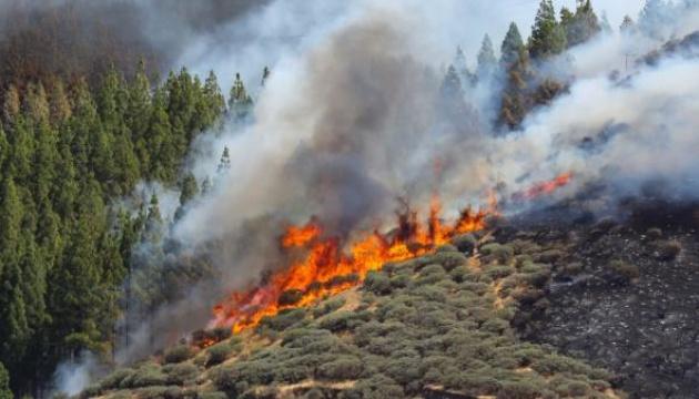 Українців попереджають про небезпеку на Канарський островах через лісові пожежі