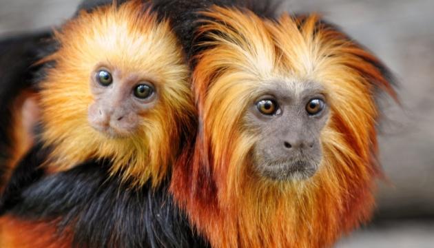 За останні 50 років кількість лісових тварин зменшилася вдвічі