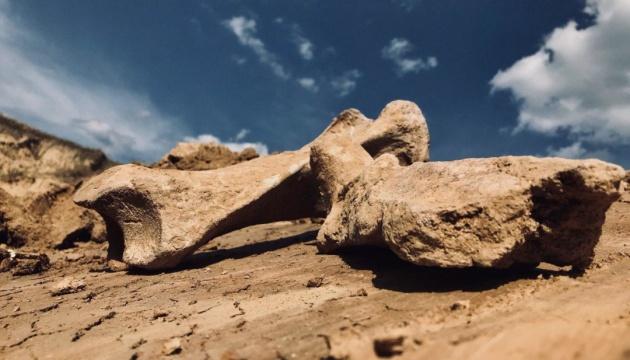 На Вінниччині знайшли рештки вимерлого шерстистого носорога