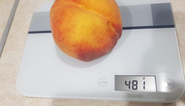 На Запоріжжі фермер виростив півкілограмовий персик