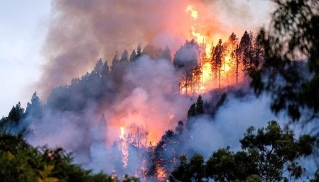 Через лісові пожежі на Канарах перекривають дороги, вісім тисяч евакуйованих