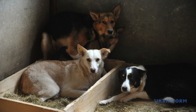 У Києві почали будувати сучасний центр захисту тварин