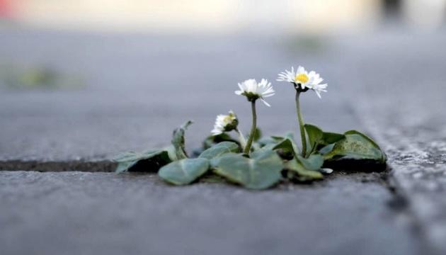 Рослини вимирають у 350 разів швидше звичайного — біологи