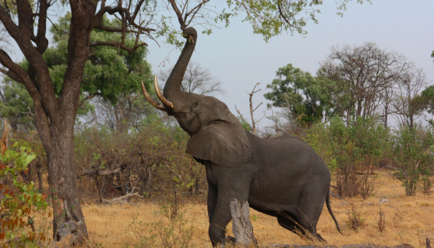 Дикі тварини в Танзанії вбили за рік майже 100 людей