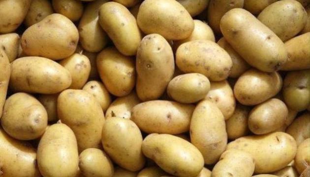 Картоплі на Чернігівщині стало менше, а її ціна зросла удвічі