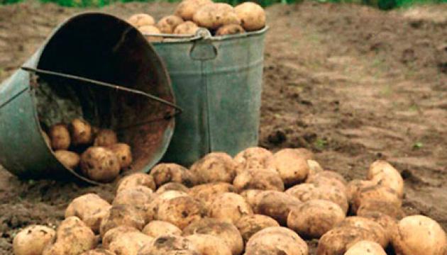 Україна є країною з одним з найбільших дефіцитів картоплі у світі - економіст ФАО