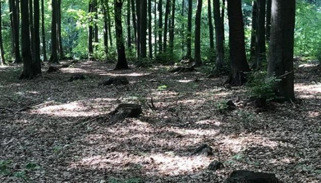 СБУ викрила незаконну вирубку дерев у заповідній зоні Закарпаття