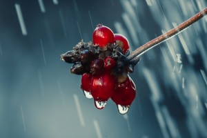 Дожди, туман и сильный ветер: в Украину идет похолодание