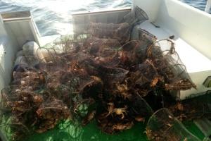 Прикордонники звільнили крабів з браконьєрських пасток на Херсонщині