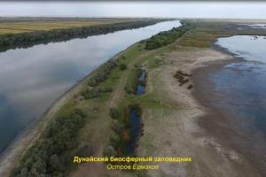 В Дунайский биосферный заповедник завезли прайд львов - экологи бьют тревогу