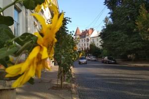 Бій подушками й вареник-фест: у Чернівцях влаштують туристичний тиждень
