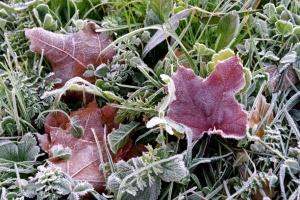 Синоптики прогнозують у понеділок від 3° морозу до 17° тепла