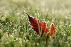 Ночные заморозки и до +25 ° днем: синоптики рассказали, каким будет начало недели