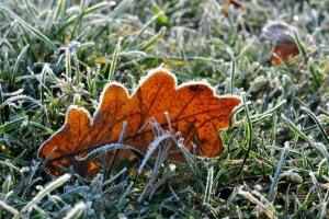 Синоптики попереджають про нічні заморозки
