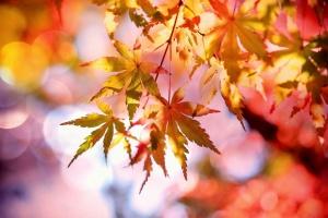 """Мінливий вересень: синоптики прогнозують від -5° до """"майже літа"""""""
