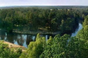 На Полтавщині знайшли дике урочище з червонокнижними лелеками