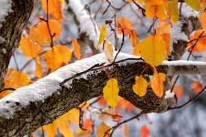 """Украинцам прогнозируют """"дневной минус"""" и мокрый снег"""
