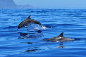 В Азовському морі прикордонники врятували дельфіна